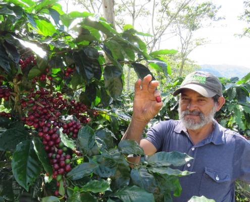 CAFES ESPECIALES DEL PARAISO