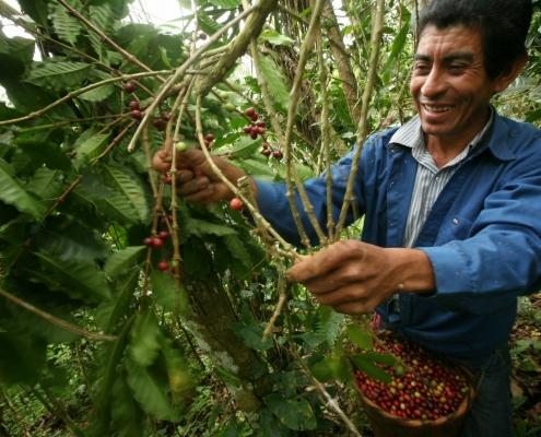 PRODUCTORES AGRICOLAS ORGÁNICOS LA TRINIDAD